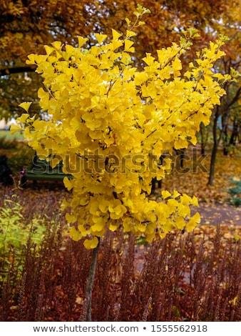 falcão · chuva · árvore · pássaro · ramo - foto stock © lightpoet