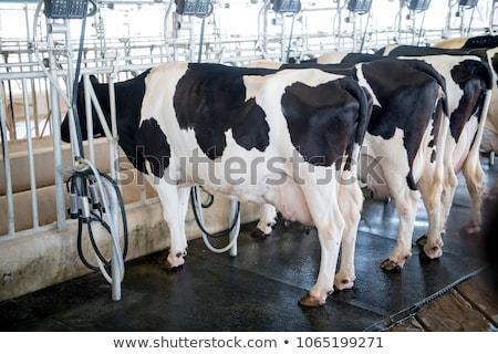 boerderij · vee · binnenkant · business · voedsel · dieren - stockfoto © oleksandro