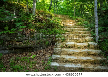 Stock photo: Stairway to the Forest