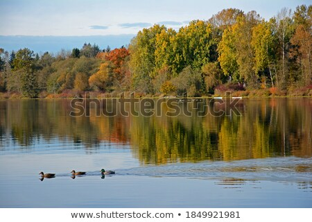 Henly lake Autumn Stock photo © rghenry
