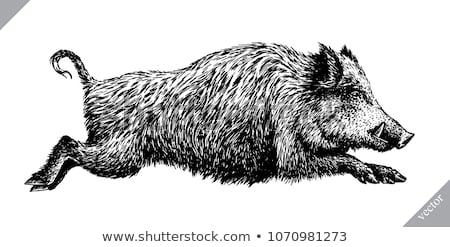 vad · vaddisznó · fut · erdő · fák · tél - stock fotó © romvo