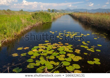 Delta céu montanha chuva rio numerário Foto stock © LianeM