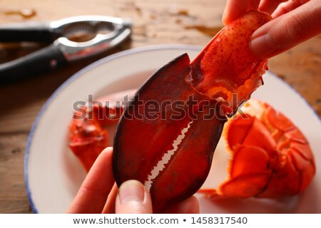 Crayfish 05 Stock photo © Undy