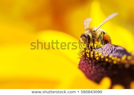 Méh gyűlés méz virág étel természet Stock fotó © jordanrusev