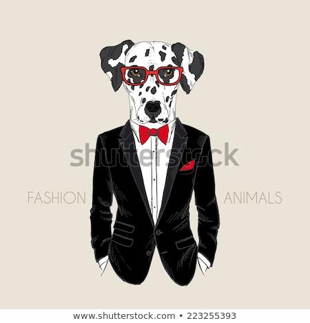 a man dressed as a dog Dalmatians Stock photo © artfotoss