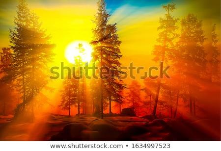 Amanecer sol brumoso campo amarillo Foto stock © ndjohnston