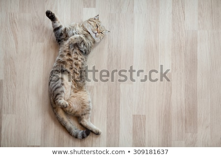 眠い · 飼い猫 · 芝生 · 自然 · 猫 - ストックフォト © stokkete