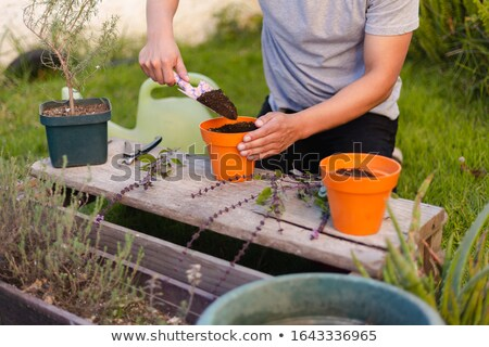 A woman put aloe vera on his hand  Stock photo © wavebreak_media