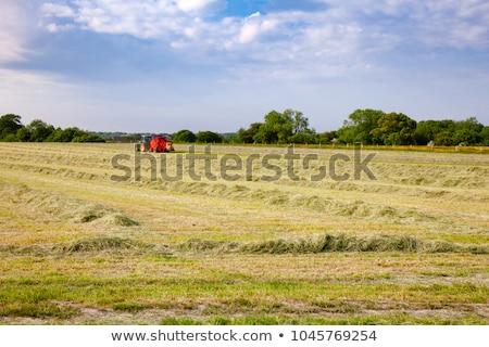 Hay windrows  Stock photo © Digifoodstock