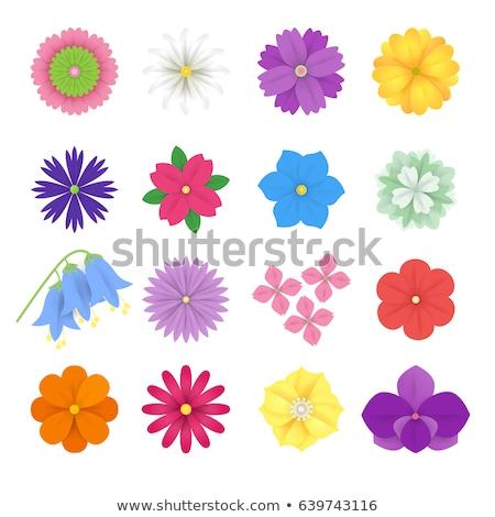 テンプレート · 国境 · 花 · 実例 · 白 · 紙 - ストックフォト © bluering