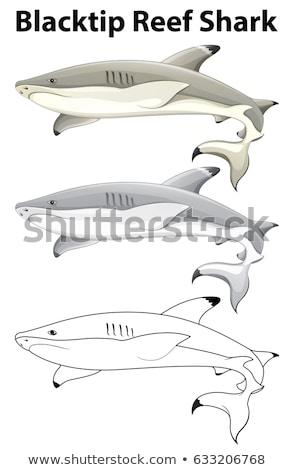 болван животного акула иллюстрация искусства белый Сток-фото © bluering