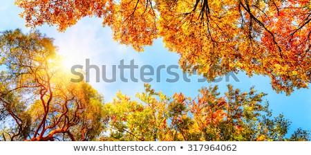 Bos vallen bladeren blauwe hemel Stockfoto © brianguest