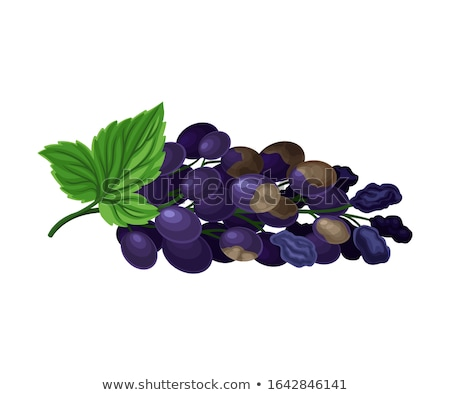 Wither rotten grape   Stock photo © tang90246