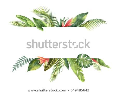 summer tropical banner isolated stock photo © barbaliss