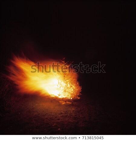 árvore fogo Bruxelas noite floresta Foto stock © IS2
