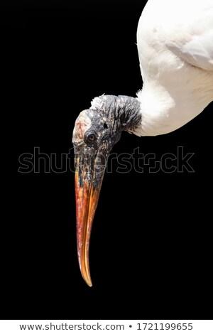 stork close-up wood background Stock photo © romvo