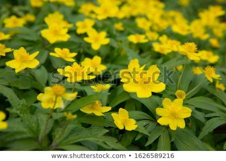 Wiosną liści zielone zimą kolor roślin Zdjęcia stock © bdspn