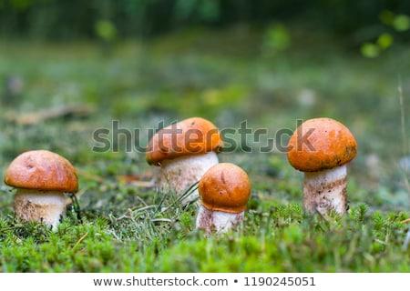 veel · champignons · gras · bos · natuur · groep - stockfoto © romvo
