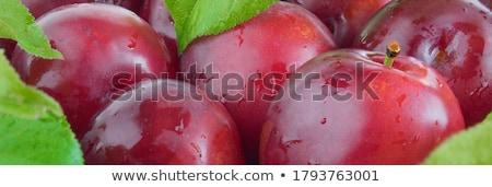 Fresh garden plums Stock photo © YuliyaGontar