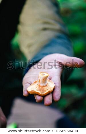man picking a red pine mushroom stock photo © nito