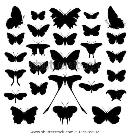 Vector vlinder icon clipart ontwerp Stockfoto © blaskorizov