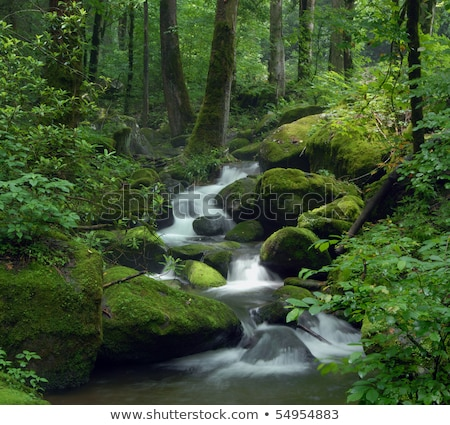 Cascading waterfall over natural rocks in forest Stock photo © jamdesign