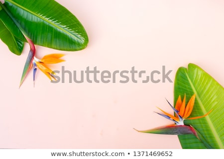 summer flat lay scenery with strelizia flowers stock photo © neirfy