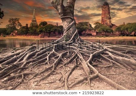 fa · gyökerek · Angkor · közelkép · parazita · megnőtt - stock fotó © lichtmeister