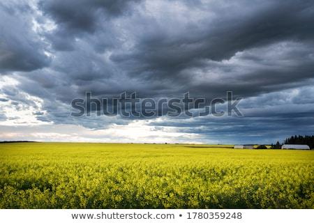Stock fotó: Préri · mező · tájkép · gabona · égbolt · farm