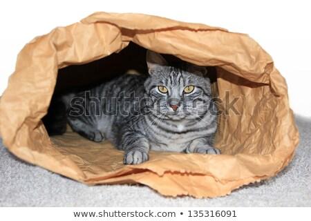 tomcat in paper bag stock photo © pterwort