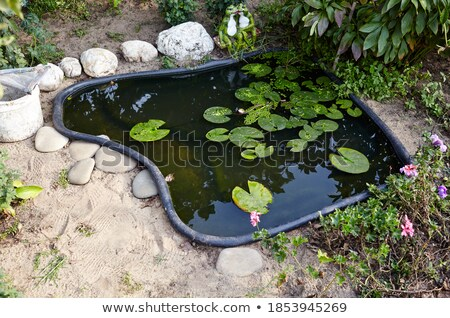 Pond landscaping Stock photo © elenaphoto