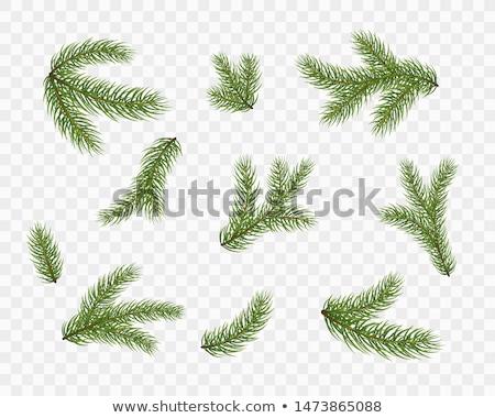 Pine geïsoleerd witte achtergrond groene Stockfoto © Raduntsev