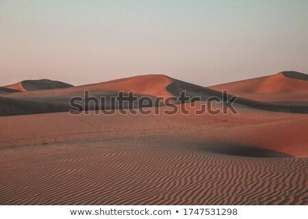 duna · grama · cerca · areia · ficar · cedo - foto stock © jsnover