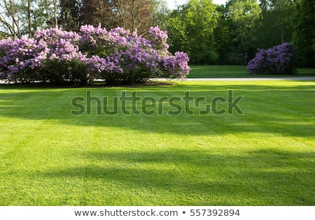 Stock photo: Spring lawn
