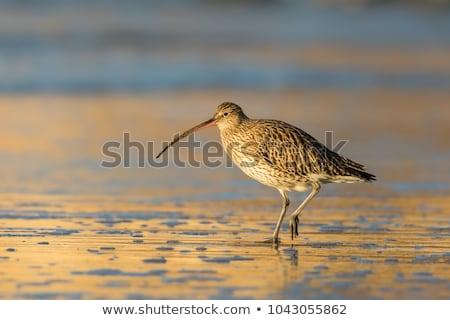 из области природы птица Сток-фото © HJpix