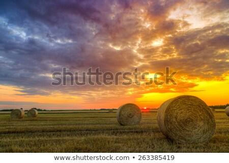 Hooi baal graan veld gesneden mais Stockfoto © timwege