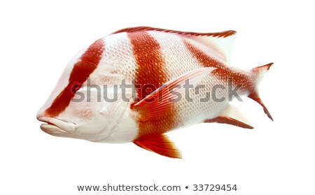 тропические рыбы подводного рыбы морем жизни тропические Сток-фото © Mikko