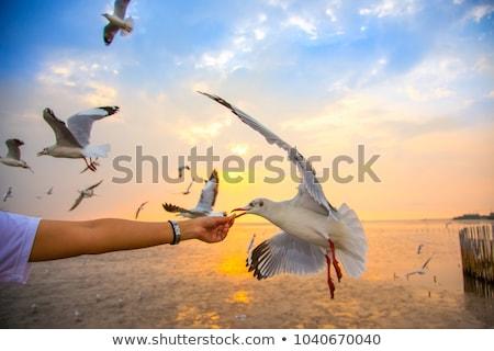 feeding seagull concept stock photo © taiga