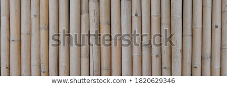Bundle of bamboo stalks on the floor Stock photo © kawing921