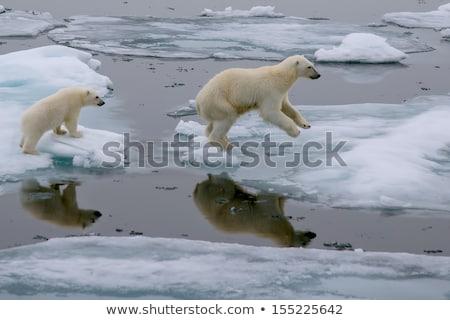 Zmiany klimatyczne wyszukiwania Internetu wyszukiwarka okno Zdjęcia stock © chrisdorney