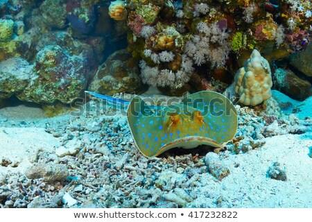 синий · воды · океана · путешествия · тропические · Азии - Сток-фото © otohime