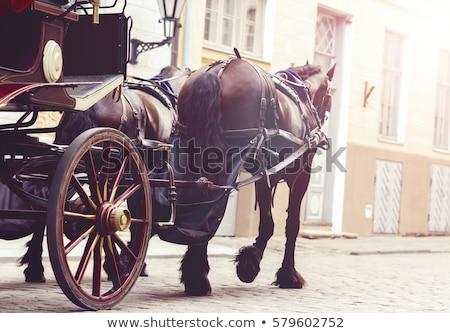 Ló fuvar utca retro állat gyönyörű Stock fotó © njaj