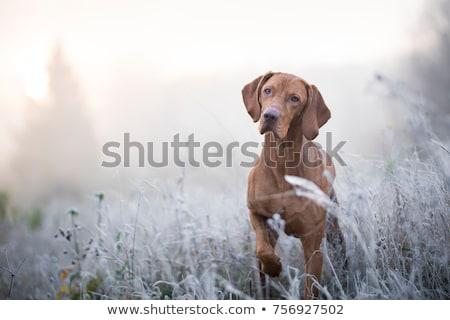 hiver · chien · écharpe · chapeau · laine · bébé - photo stock © ivonnewierink