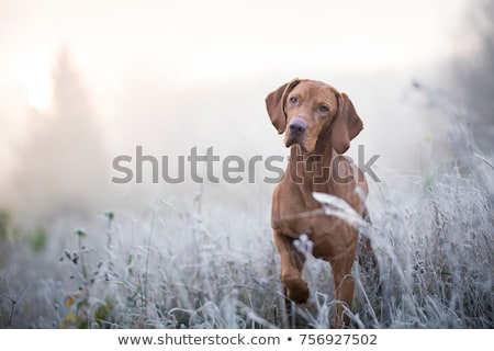 dog in winter time stock photo © ivonnewierink