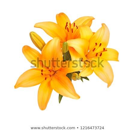 oranje · natuur · zomer · kleur · plant - stockfoto © jenbray