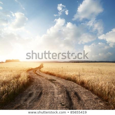 Estrada de terra campo de trigo céu flor estrada Foto stock © inaquim