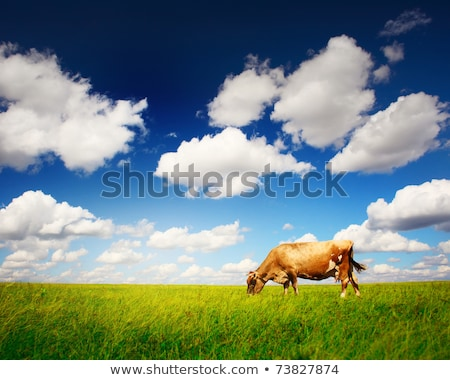 alone cow stock photo © rghenry