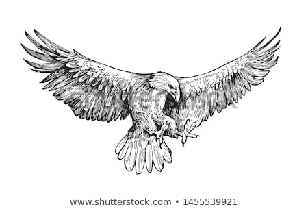 eagles illustrations Stock photo © Slobelix