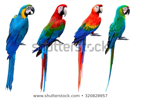 Green-Winged Macaw isolated on white Stock photo © Yongkiet