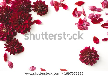 scattering petal Stock photo © mikhail_ulyannik